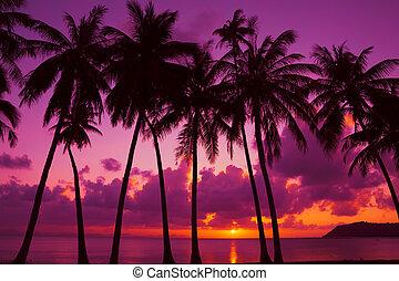 árnykép, sziget, bitófák, tropikus, pálma, thaiföld, napnyugta