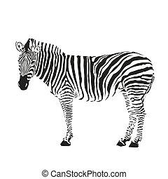 árnykép, zebra