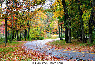 át, erdő, út
