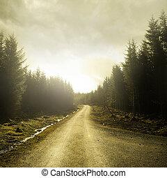 át, gyalogjáró, erdő