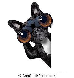 át, kutya, távcső, látszó