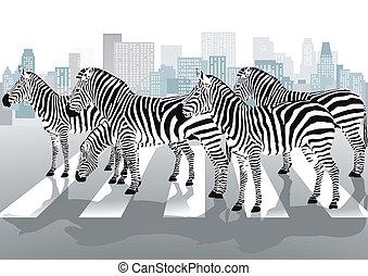 átkelés, gyalogos, zebra
