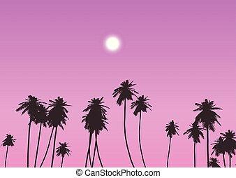 ég, 0802, ellen, napnyugta, bitófák, pálma