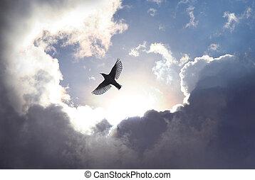 ég, madár, angyal