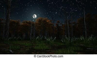 éjszaka, 4k, holdfény, ijedős, erdő, ősz