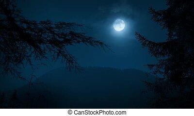 éjszaka, erdő, bitófák, koholás