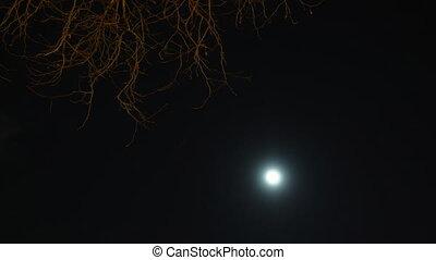 éjszaka, moon., timelapse, ég, erdő