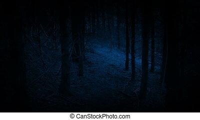 éjszaka, saját tulajdonú gépjármű, felé, gyalogló, nyílás, ijedős, erdő