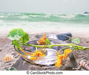 élet, ásványvízforrás, tengerpart, mozdulatlan