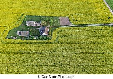 épület, tanya, rapeseed, út, kilátás, litvánia, megfog, antenna