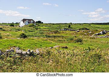 épület, zöld terep