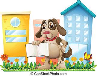 épületek, magas, könyv, birtok, kutyus, üres