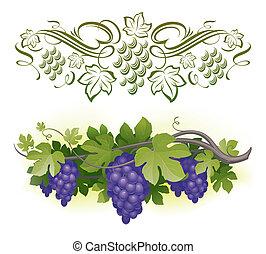 érett, &, -, szőlőtőke, ábra, calligraphic, vektor, decorarative, szőlő