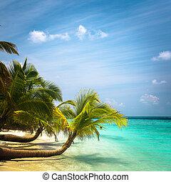 érintetlen, tropikus, maldívok, tengerpart