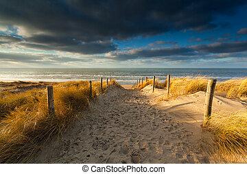 észak, napvilág, homok tenger, út, tengerpart
