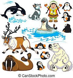 északi-sark, állhatatos, állatok, karikatúra