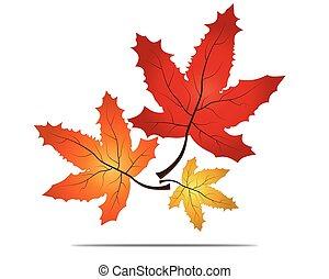 évszaki, fogalom, levél növényen, themed, jelkép, elszigetelt, ősz, háttér., időjárás, juharfa, bukás, white piros, ikon