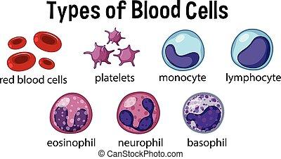 írógépen ír, cellák, vér
