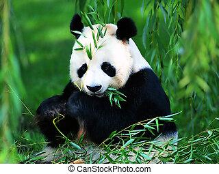 óriási panda