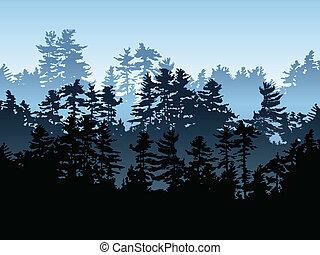 örökzöld, erdő