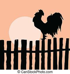öreg, kakas, árnykép, kerítés