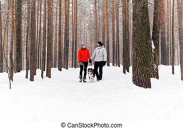 összekapcsol jár, tél, erdő, fiatal, kutya