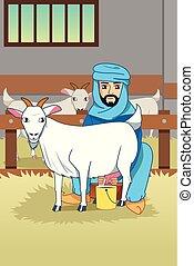 övé, muzulmán, ábra, farmer, fejés, kecske, istálló