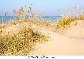 új, michigan, tengerpart, bivaly