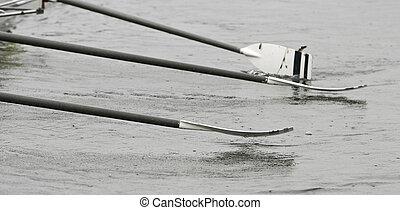újonc, evező, csónakázik, legénység