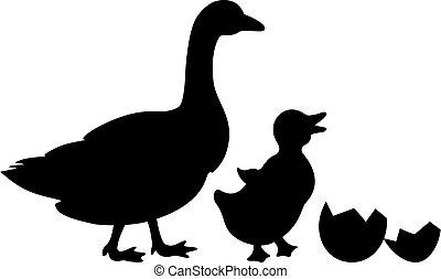 újszülött, kacsa, ikon, vektor, kiskacsa