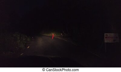 út, éjszaka, erdő, gyalogló, őz