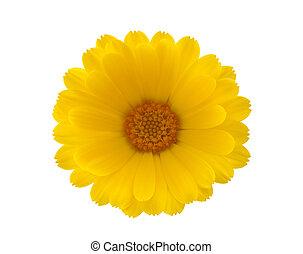 út, darabka, virág, sárga
