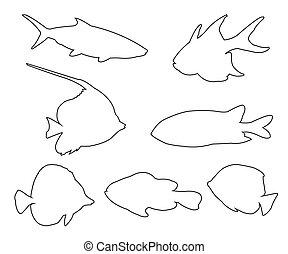 út, fish, állhatatos, white háttér