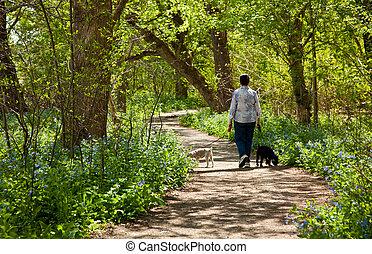 út, hölgy, kutyák, csillagvirágok