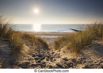 út, tengerpart, északi-tenger, dűnék