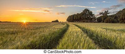 útvonal, mező, búza, napnyugta, traktor