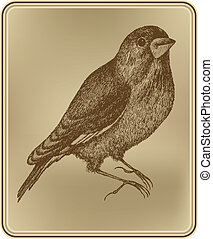 ülés, illustration., drawing., kéz, vektor, madár