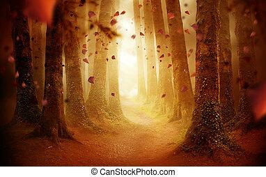 ősz, át, erdő, gyalogjáró