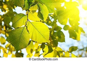 ősz, évszaki, tapéta