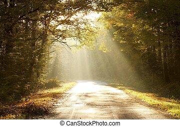 ősz, bűbájos, hajnalodik, erdő