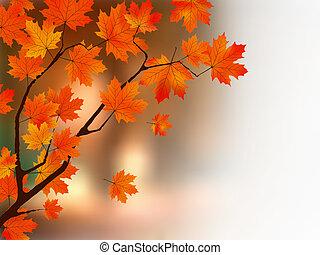 ősz, befest, fa., juharfa