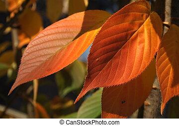ősz, berozsdásodott, zöld