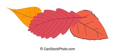 ősz, elszigetelt, háttér, fehér, színes, levél növényen