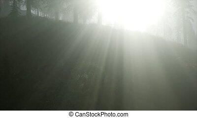 ősz erdő, köd, reggel