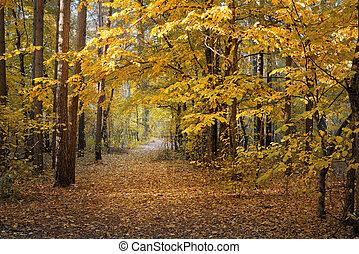 ősz erdő, nap