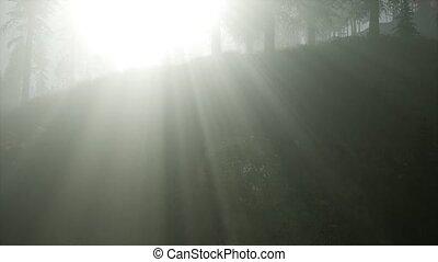 ősz erdő, reggel, köd
