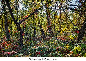 ősz erdő, vad