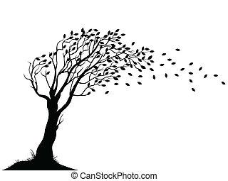 ősz, fa, árnykép