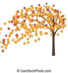 ősz, fa, felteker, juharfa