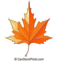 ősz, fehér, elszigetelt, levél növényen, juharfa, háttér